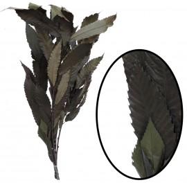 Castaño ↕ 85 cm Verde
