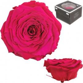 Rosa XXL Rosa Fuerte (1 ud)