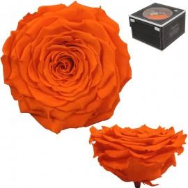 Rosa XXL Naranja (1 ud)
