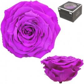 Rosa XXL Purpura Claro (1 ud)
