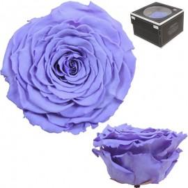 Rosa XXL Violeta (1 ud)