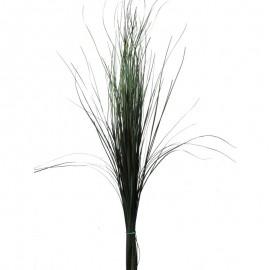 Bear Grass Vert 80 cm