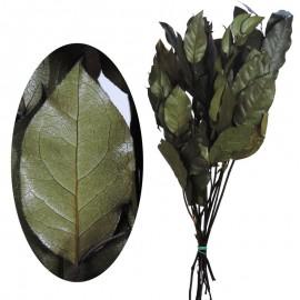 Salal Verde 50cm