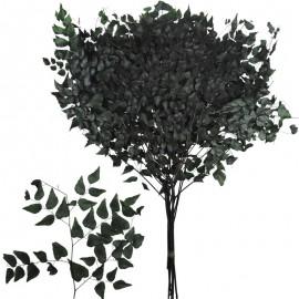 Avencao Verde 70-80 cm ↕