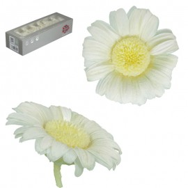 Mini Gerbera x12 uds Blanco