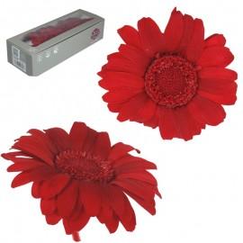 Mini Gerbera x12 uds Rojo