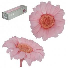 Mini Gerbera x12 uds Rosa