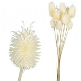 Mini Cardo (12 uds) Blanco