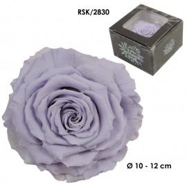 Rosa King Ø 12 cm Lila (1 ud)
