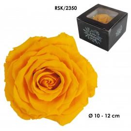 Rosa King Ø 12 cm Amarillo...