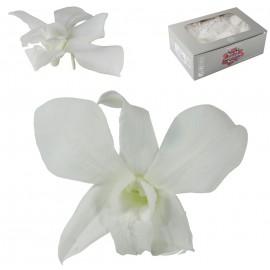 Orquidea Blanca Ø 9 cm (5ud)