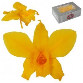 Orquidea Amarillo Azafran Ø...