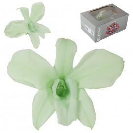 Orquidea Verde Ø 9 cm (5ud)