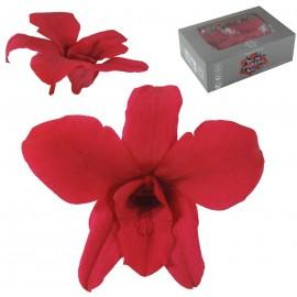 Orquidea Rosa Fuerte Ø 9 cm...