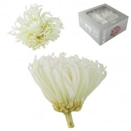 Anastasia Crisantemo Blanca...